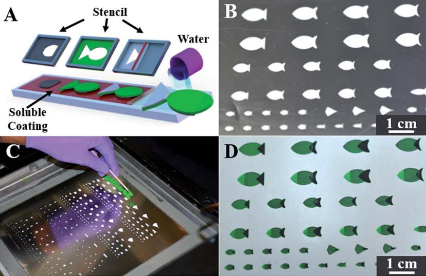 2D-печать позволила создать подвижных искусственных рыбок