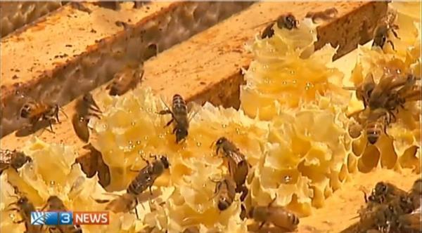 3D-печать поможет пчелам делать мед