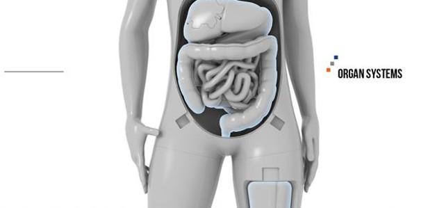 3D-печать в изучении анатомии человека