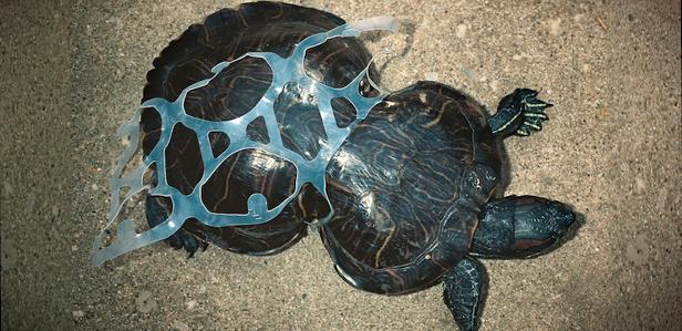 3D-печатная упаковка спасёт морских животных от последствий загрязнения водного пространства
