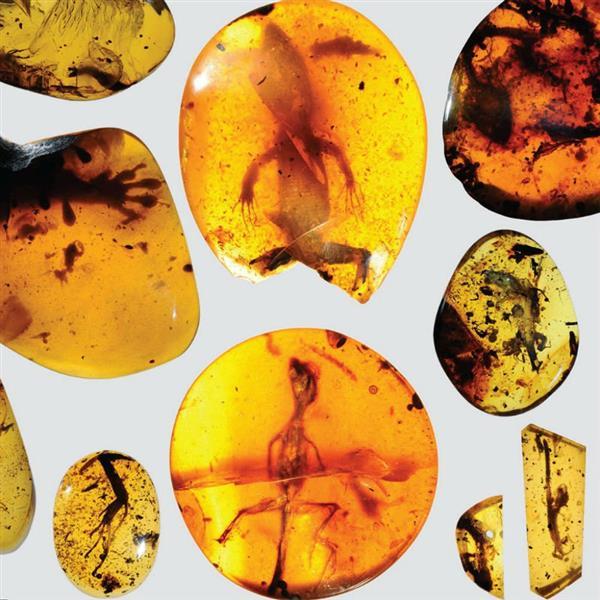 3D-технологии помогли выяснить происхождение ящериц с помощью самого древнего хамелеона в мире