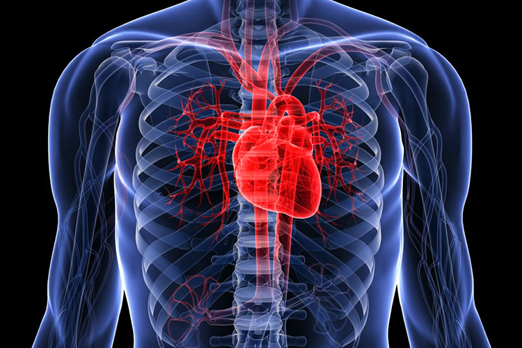 AI algorithm predicts risks of heart seizure more precisely than doctors