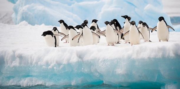 Французы отправляют Интернет вещей в Арктику