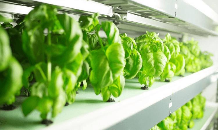 FreshBox Farms focus on quantity, not technologies