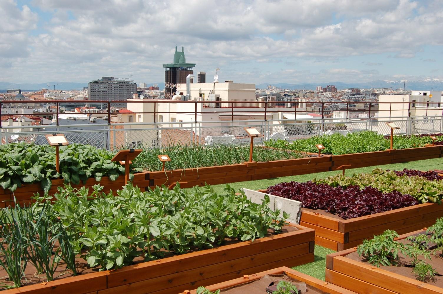 Городское фермерство: проблемы и запреты