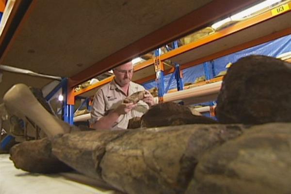 Квинсленд хочет привлечь туристов с помощью 3D-печатных динозавров