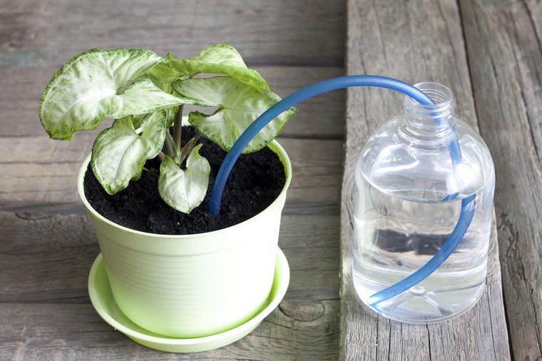 На случай отпуска: 5 способов поливать растения, пока вы в отъезде