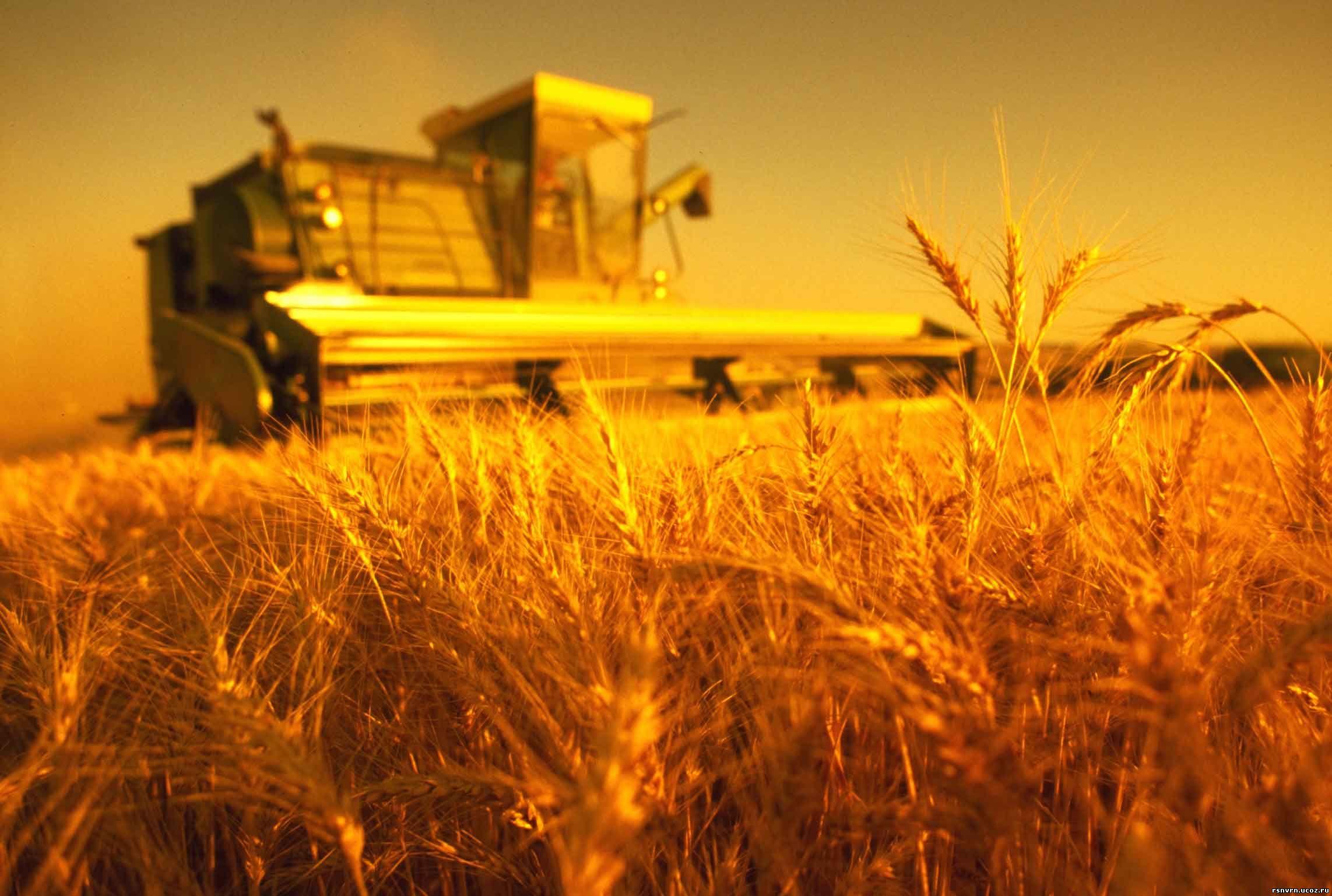 Несколько идей по открытию фермерского хозяйства