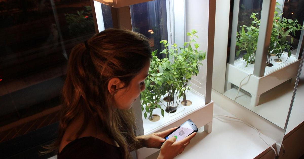 Niwa: контролируйте рост растений с помощью смартфона