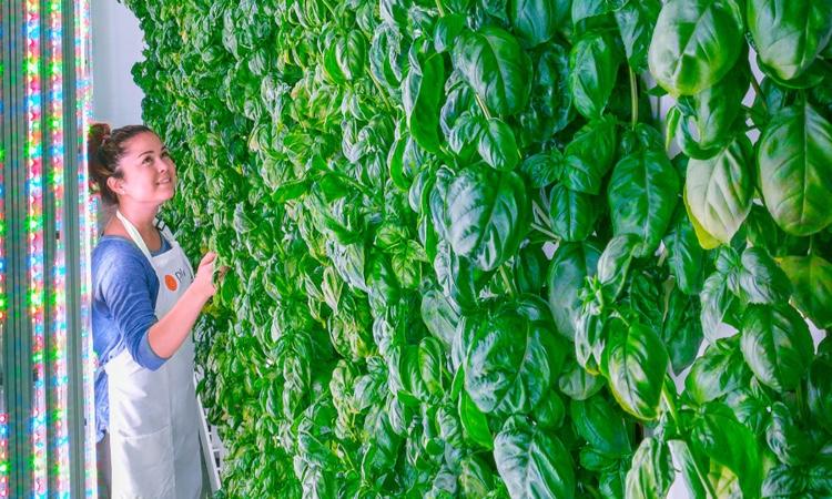 Plenty откроет вертикальные фермы во всех мегаполисах мира