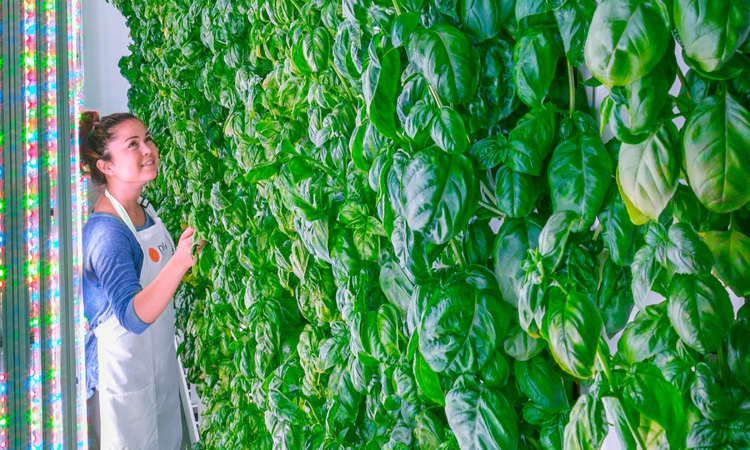 Plenty will open vertical farms in all megacities of the world
