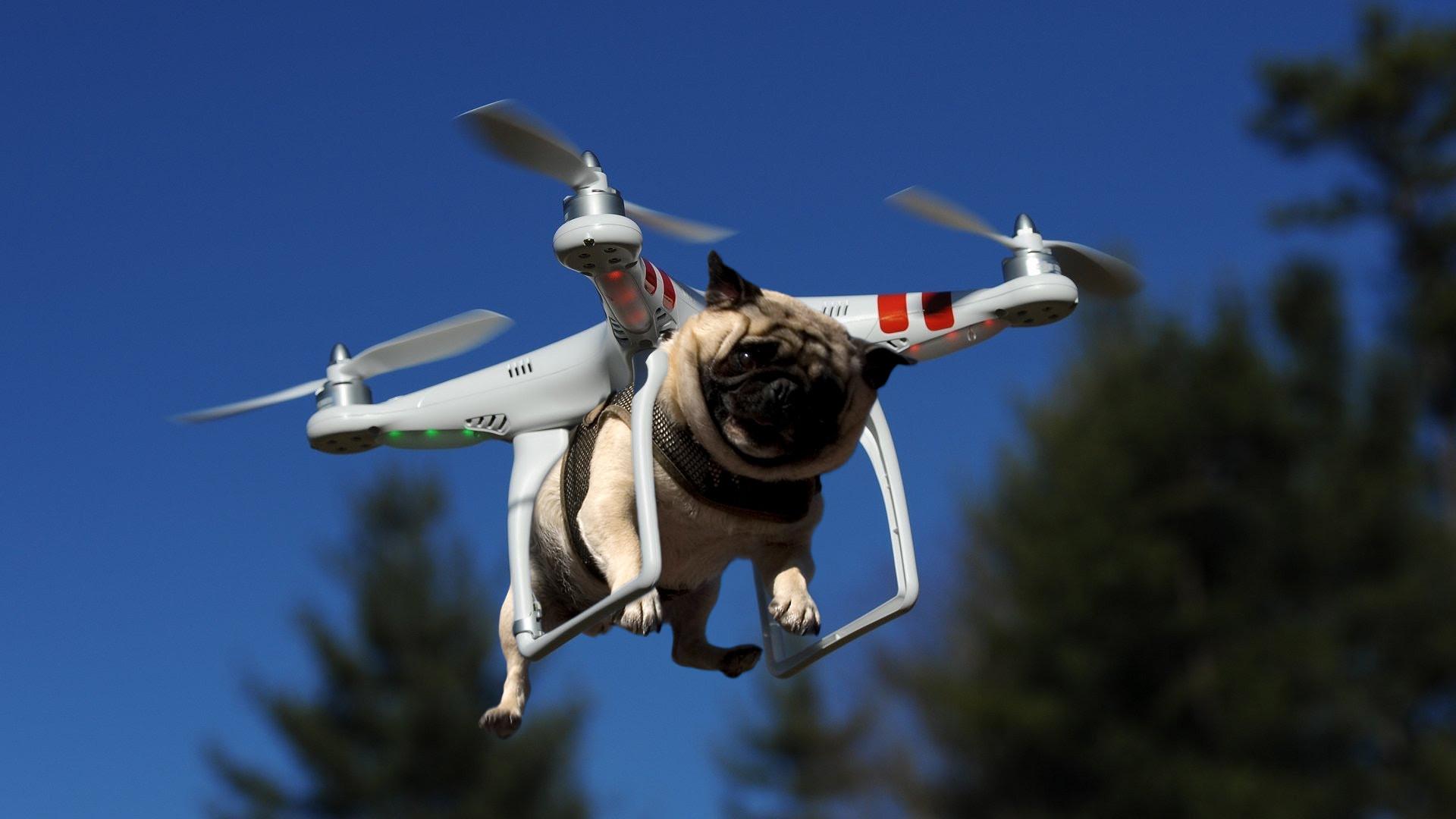 Профессии для дронов: кем они могут работать