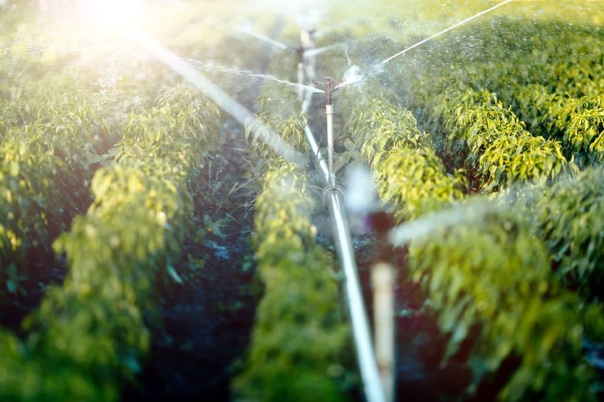 Садоводческие гаджеты – не дай цветам засохнуть