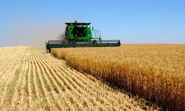 Сельскохозяйственные тренды будущего. Мнение эксперта