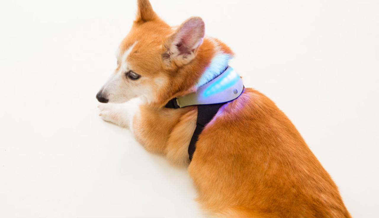 Шлейка, созданная спомощью 3D-печати, позволит понять «язык» собак