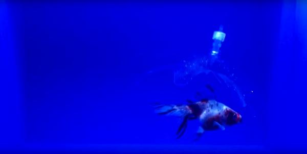 Специалисты MIT напечатали гидрогелевого робота, который может ловить рыбу