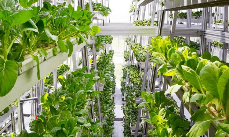 Стартап из Сингапура получил 1,5 млн долларов на производство вертикальных ферм