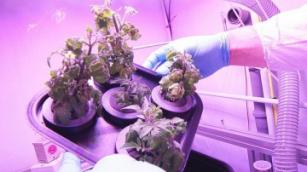 Астронавты превратятся в фермеров