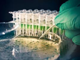 Pharmaceutical company Celgene acquired Impact