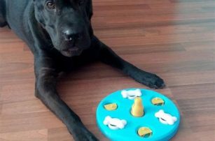 Spanish designer creates 3D printable 'Dog's Game' set to help spur canine intelligence