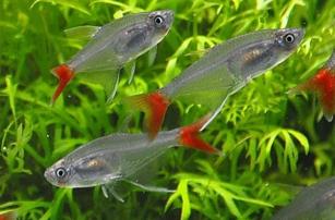 Красивый 3D-печатный аквариум для рыб от компании Norrom представлен на Kickstarter