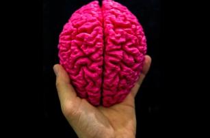 Мозг человека напечатали на 3D-принтере