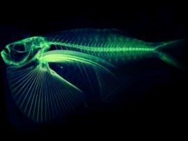 Ученый из США создает модели для 3D-печати всех видов рыб на планете