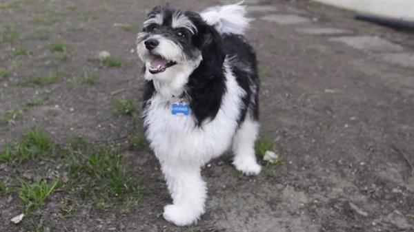 3-лапый пес по кличке Хобс получит 3D-печатный протез лапы от калифорнийских студентов