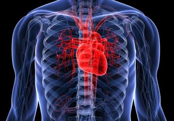AI algorithm predicts risks of heart seizure more precisely than doctors