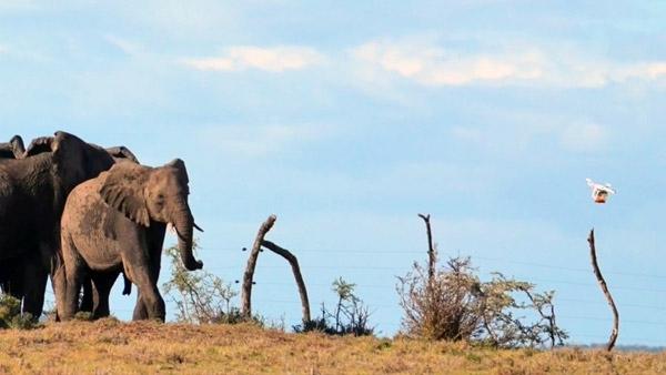 Дроны-пастухи в Танзании