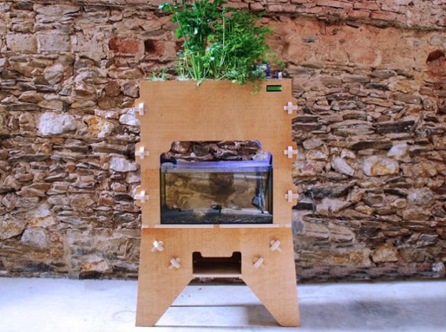 Это не магия, это аквапоника. Строим домашний сад по мануалу Aquapioneers Ecosystem