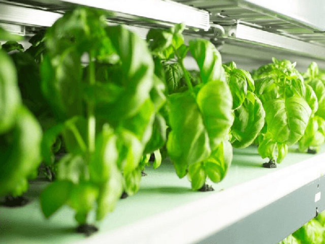 FreshBox Farms focus on quantity, not technologies