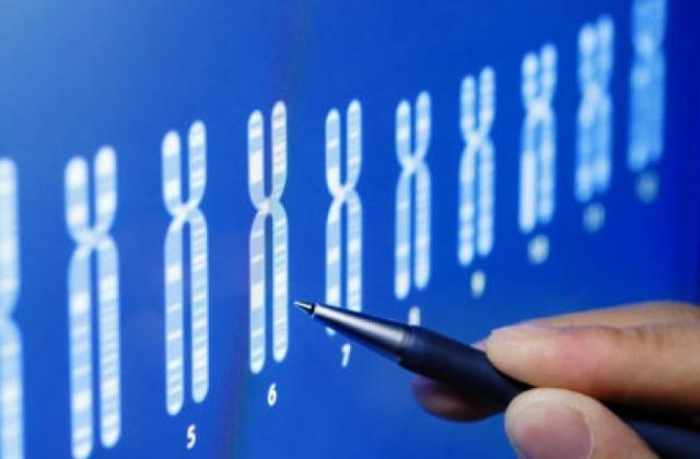 Генетичне «створення» розумних дітей неминуче