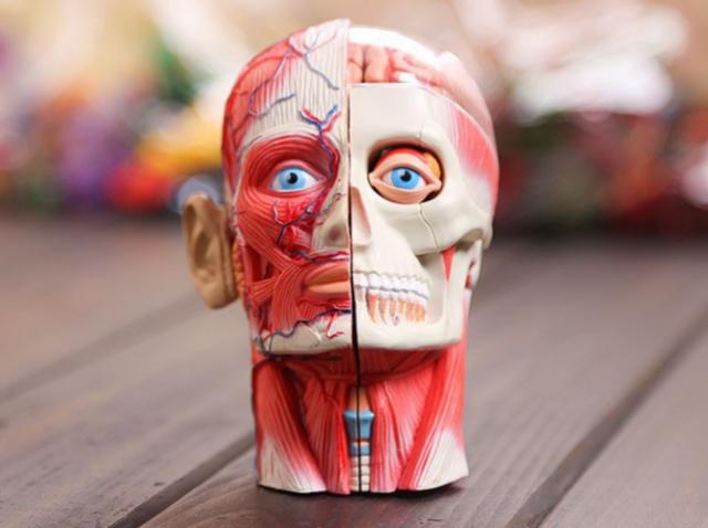 Греческий стартап 3D Life приспособил 3D-печать для медицинских целей