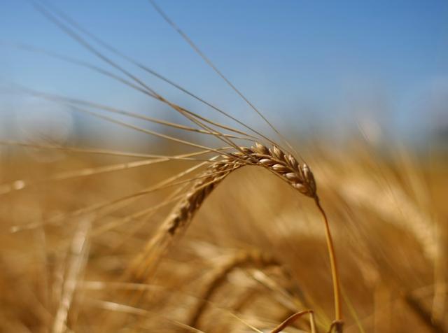 Интернет вещей и смарт-технологии для украинского агробизнеса