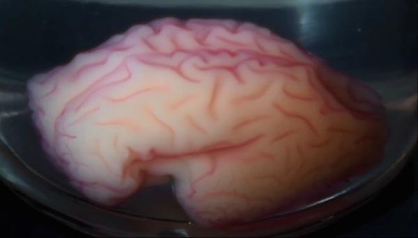 Изготовленная с помощью 3D-принтера модель показывает, как формируются извилины человеческого мозга