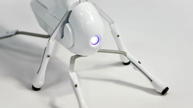 Конструктор Antbo позволяет за несколько минут создать умного робомуравья