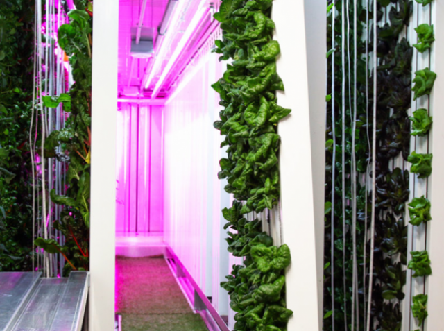 Container farming withstands even hurricanes