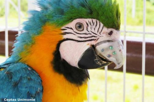 Попугай Гиги получил 3D-печатный титановый клюв