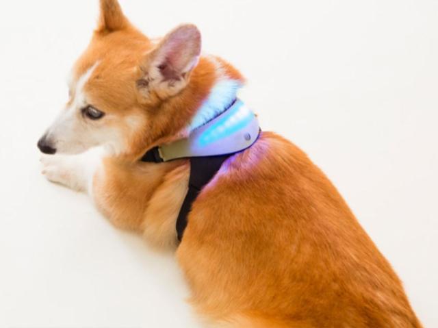 Шлейка, созданная с помощью 3D-печати, позволит понять «язык» собак