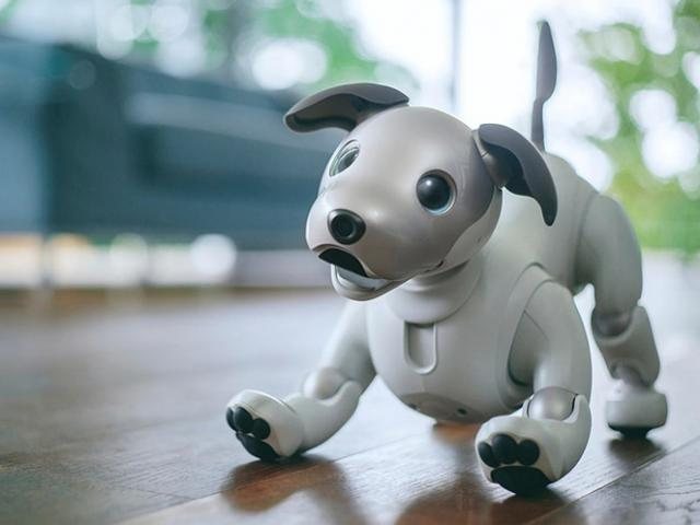 Sony вернула робота-пса Aibo