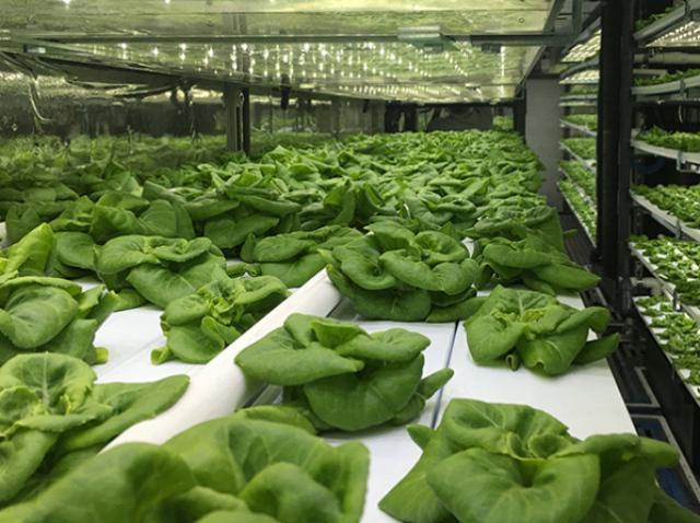 Стартап из Калифорнии придумал, как выращивать овощи с минимальным количеством воды