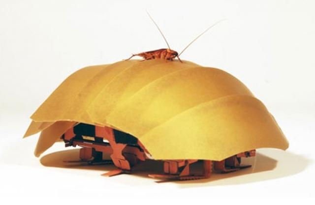 Таракан-робот поучаствует в спасательных операциях