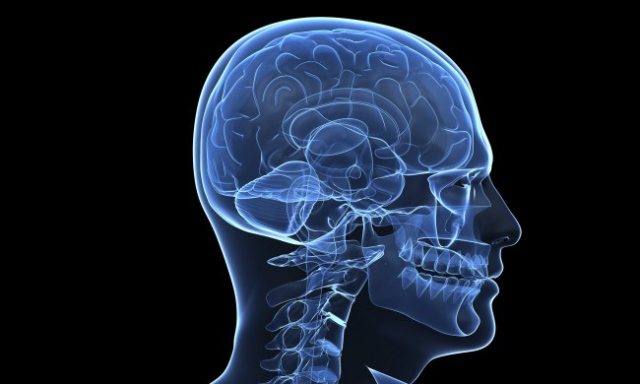 Ученые приблизились к созданию бионического мозга человека