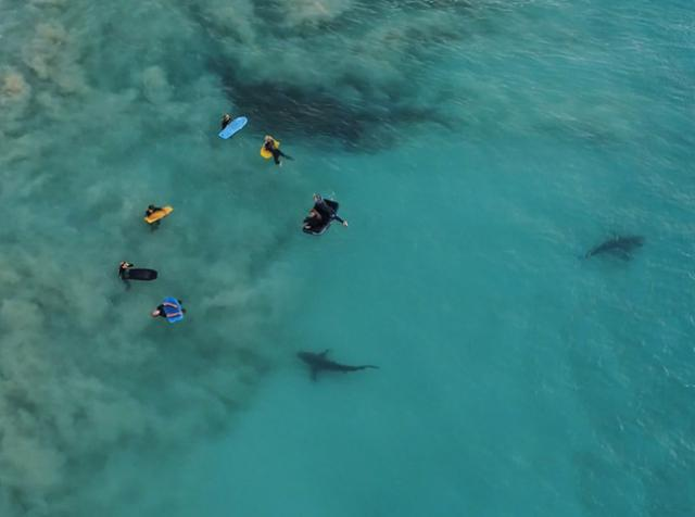 The drone captured sharks swimming up to floating children in Australia