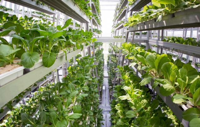 Hugest European vertical farm to appear in the Netherlands