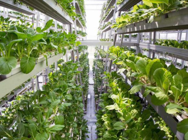 В Нидерландах появится крупнейшая в Европе вертикальная ферма