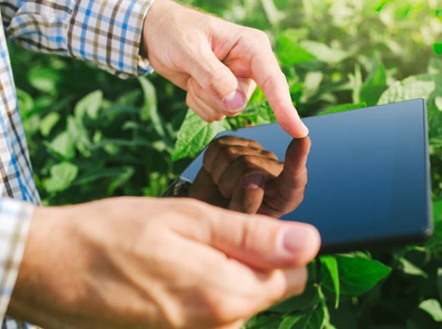 Японские коммуникационные компании развивают умное фермерство