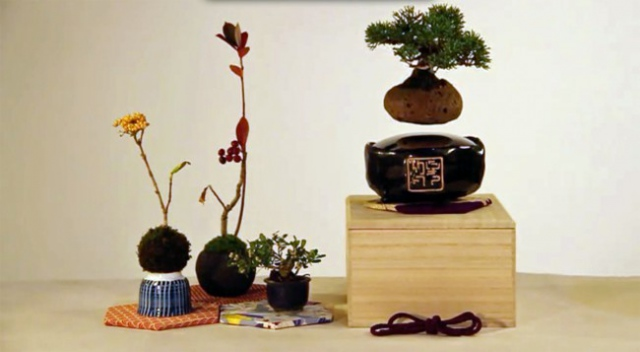Японцы собирают деньги на левитирующий бонсай