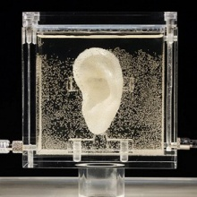Artist 3D printed Vincent van Gogh's ear using relative's DNA